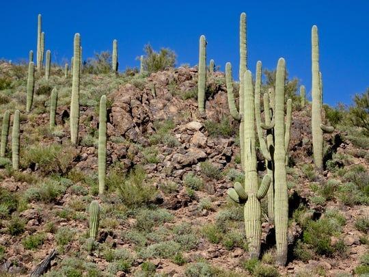 El Hidden Canyon Trail en Tucson es una escapada escénica rápida justo a las puertas del JW Marriott Starr Pass Resort.