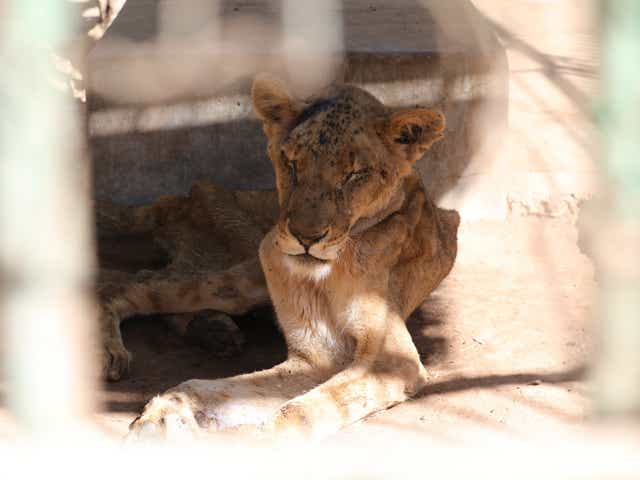Image result for animals in sudan