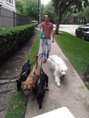 Caleb Schaffer walking a group of dogs.