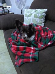 Colder temperatures mean protecting pets, say weather officials.