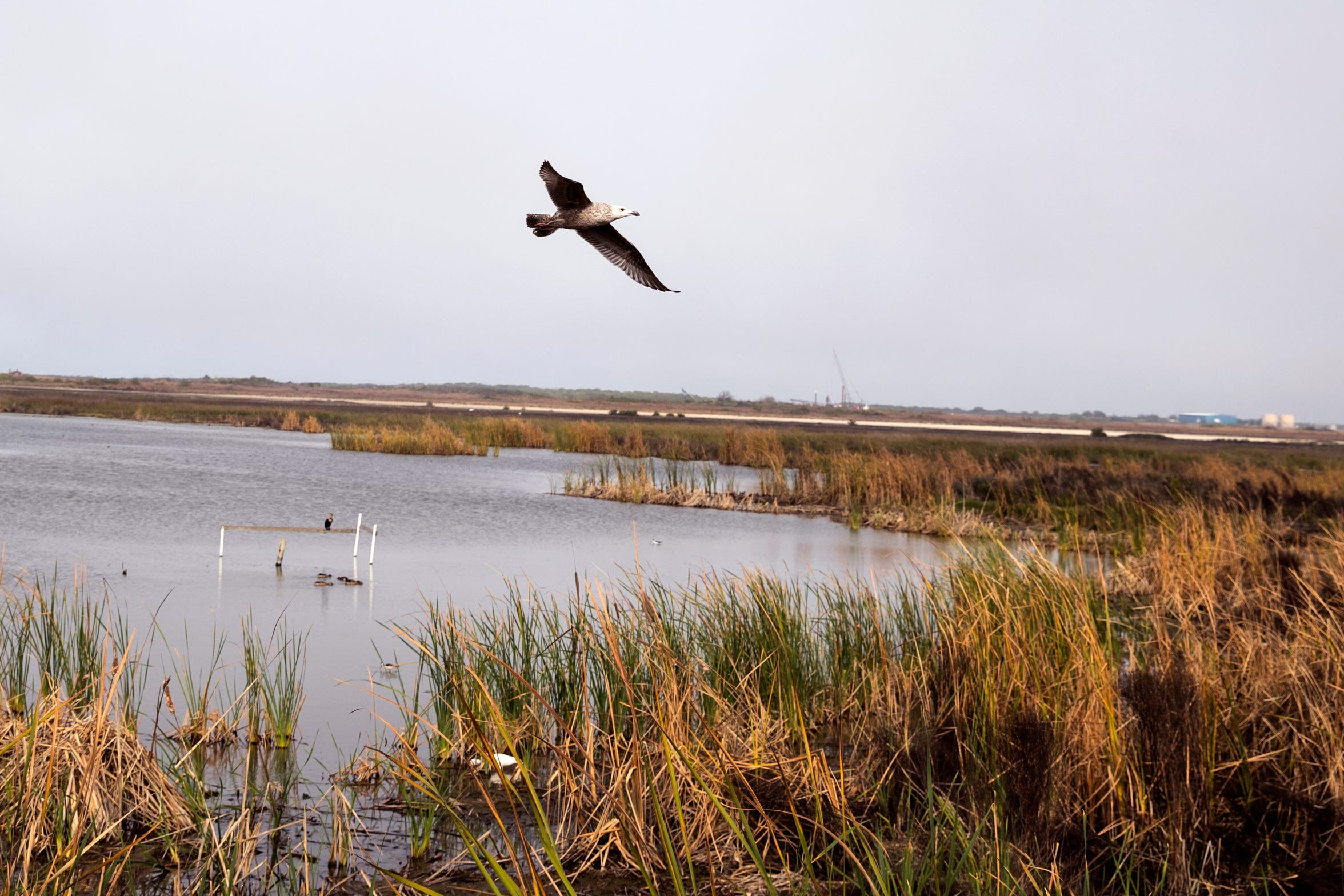 A variety of birds can be seen at the Leonabelle Turnbull Birding Center in Port Aransas. It is located at 1356 Ross Avenue, adjacent to the Nueces County Water Treatment Facility.