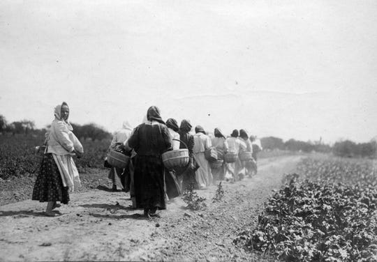 Polish immigrants walk to the public potato patches Pingree established on 430 acres of city land during the panic of 1893 and subsequent depression. Pingree became a national hero for the idea, and the potato patch program was copied in other major cities.