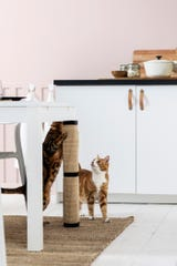 Ikea's cat scratching mat transforms an ordinary table leg into a scratching tree when secured with sewn-in straps. Preserving a home's wooden furniture, this mat ($7.99) addresses a cat's need to sharpen claws and stretch without buying a separate, unsightly post.