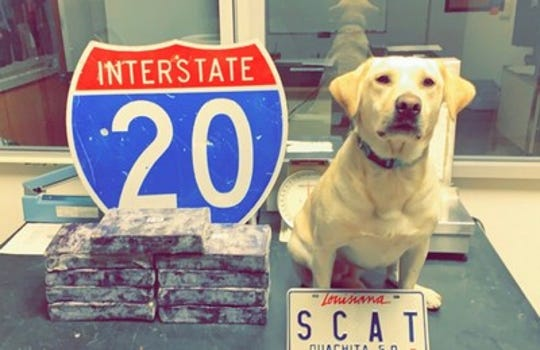 An OPSO K-9 deputy poses with $900,000 in methamphetamine that was seized during a traffic stop.