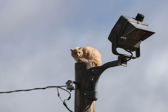 A cat stuck up a pole was rescued in Las Cruces on Wednesday, Jan. 22, 2020.