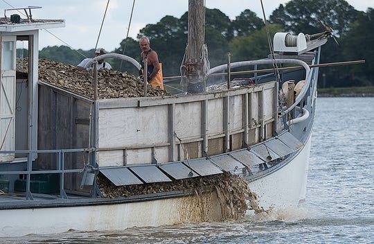 Juvenile oysters are shot into Maryland's Tred Avon river using high pressure water. Adult oysters declined 50% in Maryland from 1999 to 2018 despite public funding for oyster restoration exceeding $50 million.