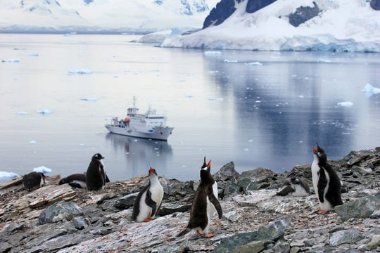 In Antarctica, you'll scramble off a Zodiac raft to walk among thousands of penguins.