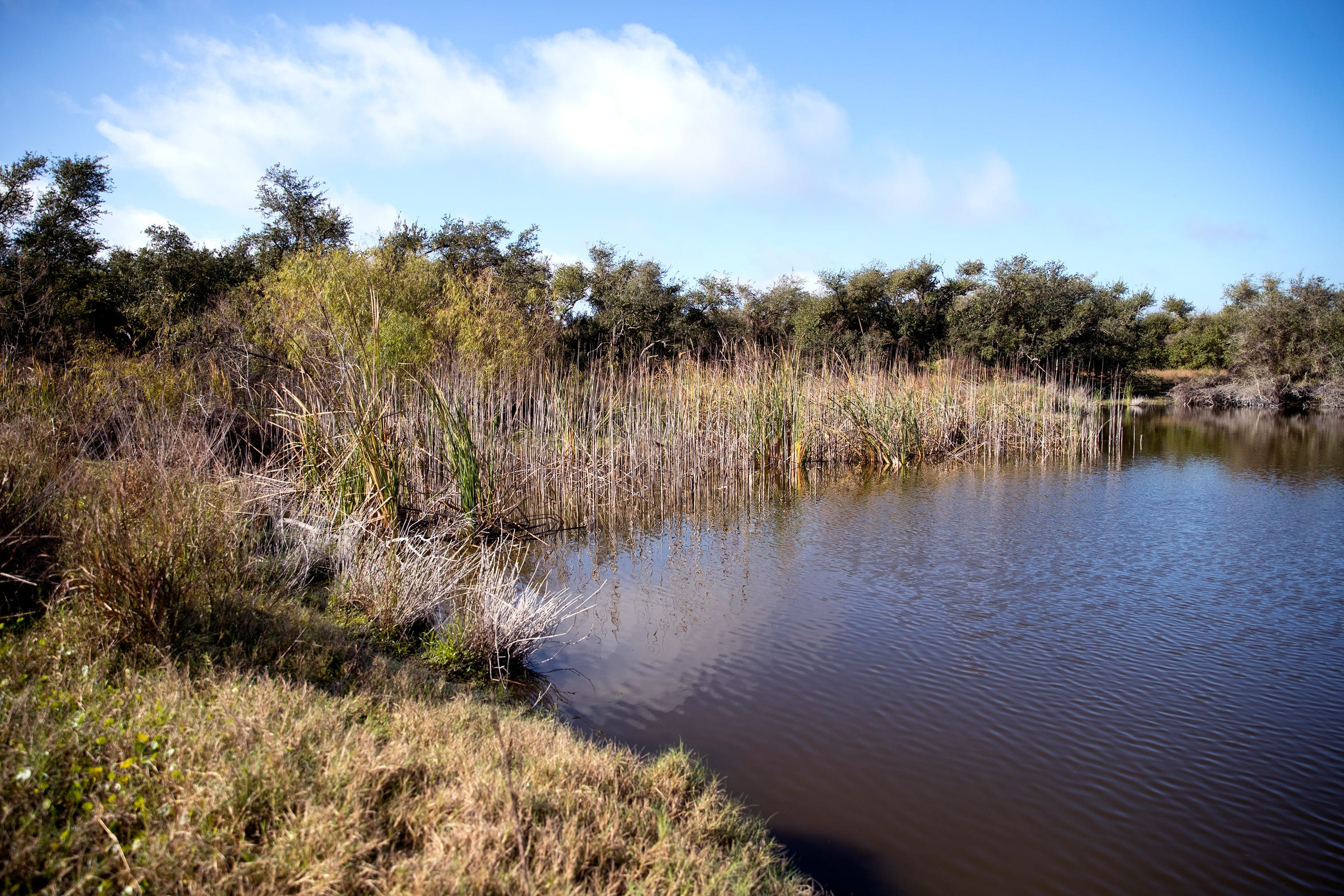 The Linda S. Castro Nature Sanctuary in Fulton is an Aransas Pathways site. It includes a live oak motte, a remnant of a coastal prairie and an ephemeral pond. An oak mottes is a valuable stopover habitat for migrating songbirds.