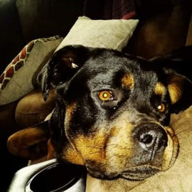 Delhi Twp. Police are looking for two men who threw a dog out of moving truck.