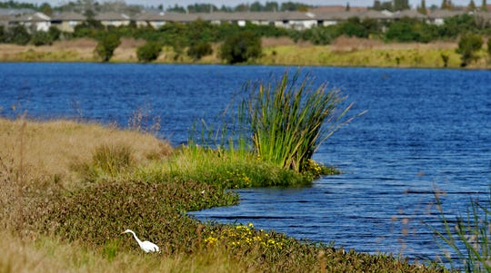 In this Tuesday, Dec. 11, 2018, file photo, an egret looks for food along Valhalla Pond in Riverview, Fla. The Trump administration was expected to announce completion as soon as Thursday, Jan. 23, 2020, of one of its most momentous environmental rollbacks, removing federal protections for millions of miles of the country's streams, arroyos and wetlands.
