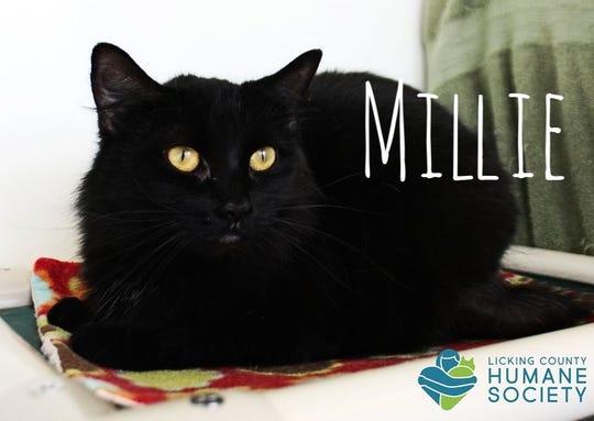Millie is a 2-year-old, spayed, medium hair beauty.
