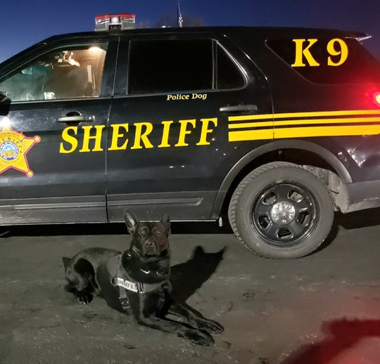 K-9 Diesel, of the Ottawa County Sheriff's Office, helped catch a woman who was allegedly fleeing arrest earlier this week.