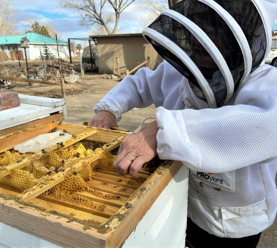 Debbie Gilmore checks on a colony of bees that died over the winter.