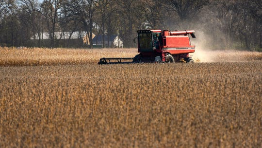 A farmer harvests soybeans near Cold Spring in this 2018 Times file photo.