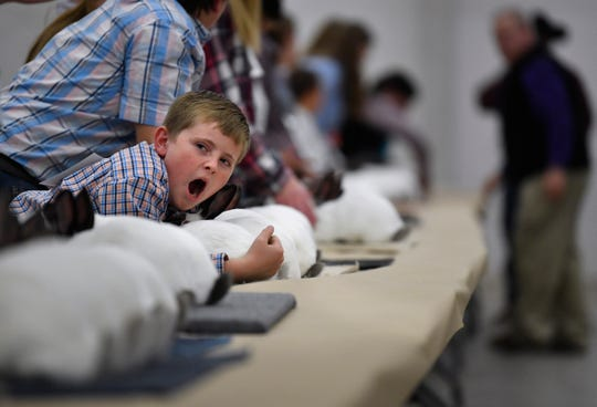 Lawn Elementary School third-grader Kaden Boulter yawns as he waits for rabbit judge David Frazier to come his way during the Taylor County Livestock Show on Thursday.