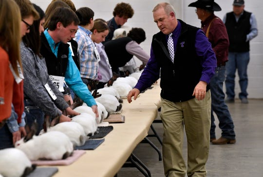 David Frazier, a professor of Agriculture at Tarleton State University, walks down the line of rabbits Thursday at the Taylor County Livestock Show.