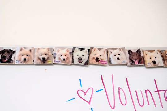 Magnets show graduates of the program at the ASPCA's Behavioral Rehabilitation Center in Weaverville including several Samoyeds who were rescued from a hoarding situation.