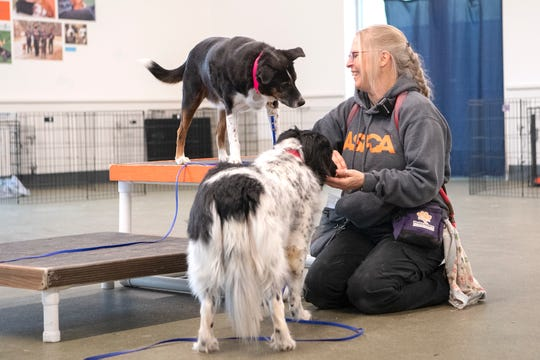 "Lisa Marvin, an ASPCA Behavior Rehabilitation Specialist, smiles as she works with program graduate Lily Jane, left, and Keith, who both look to her for treats during a treatment session at the ASPCA's Behavioral Rehabilitation Center in Weaverville on Dec. 13, 2019. Lily Jane was adopted by a staff member after graduating from the program and now works as a ""helper dog"" bringing comfort and guidance to the fearful dogs in the program."