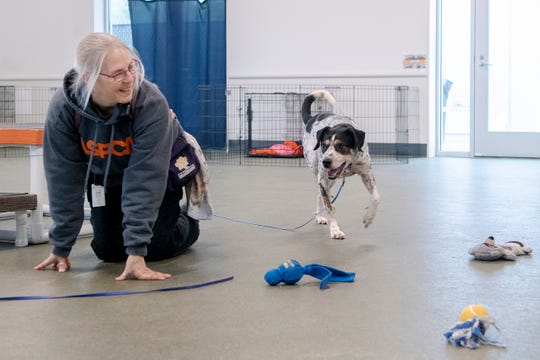 Lisa Marvin, an ASPCA Behavior Rehabilitation Specialist, works with Speck during a treatment session at the ASPCA's Behavioral Rehabilitation Center in Weaverville on Dec. 13, 2019.