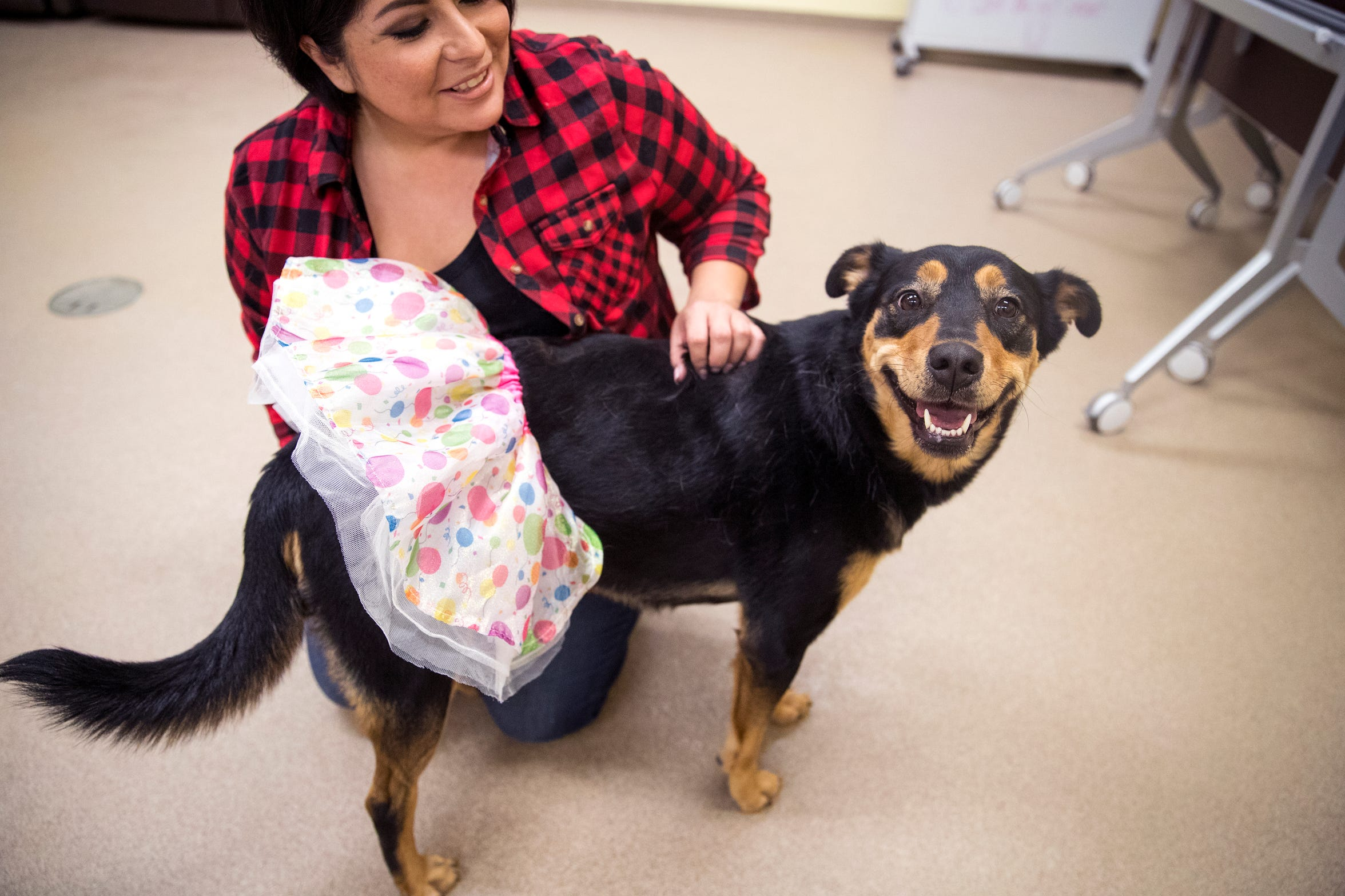 Reese is one of several dogs at the Gulf Coast Humane Society looking for a forever home. She is almost four years old, has been in the shelter for six months and is a major lap dog.