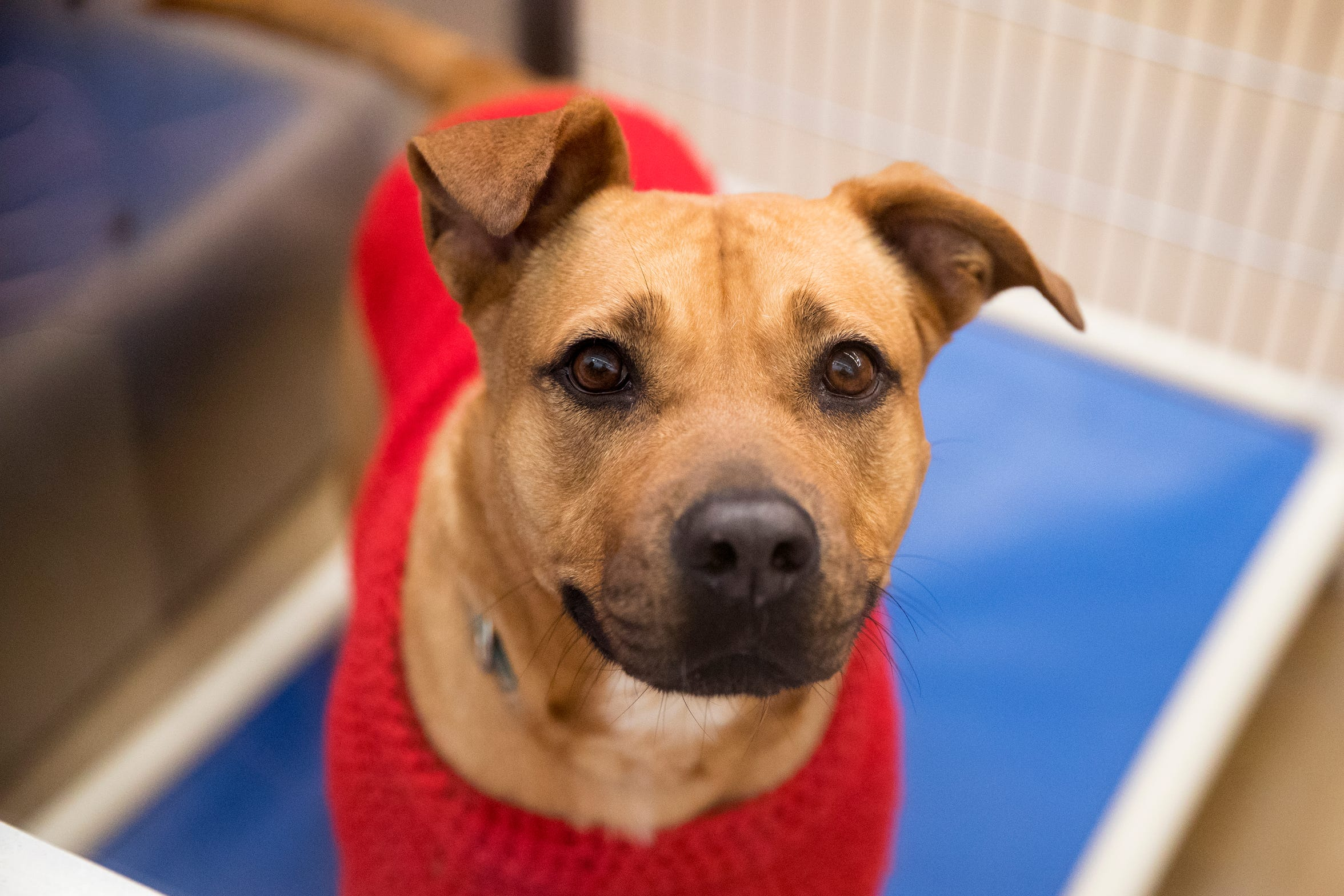 Kiki is one of several dogs at the Gulf Coast Humane Society looking for a forever home. She is two years old, has been in the shelter for six months and loves to play.