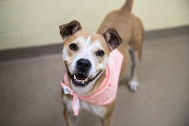 Carolina is one of several dogs at the Gulf Coast Humane Society looking for a forever home. She is four years old, has been in the shelter for over a year and likes to take charge.