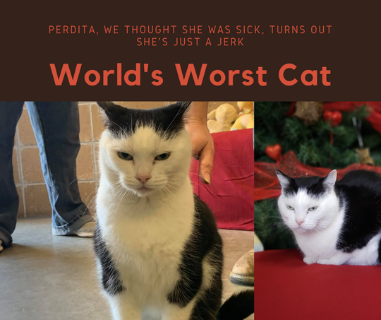 Mitchell County Animal Rescue is waiving adoption fees in the hope that someone will take the cat named Perdita off their hands.