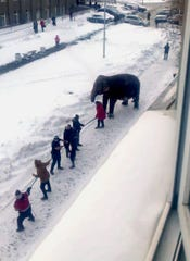 Circus workers pull an elephant in Yekaterinburg, Russia, Friday, Jan. 24, 2020. Two elephants escaped from a local circus while its troupe tried to load then into a truck to head to the next destination.