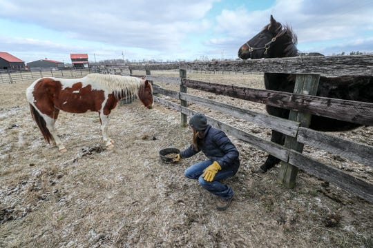 Shara Wiesenauer visits with Diamond, left, and Knox, right, two feral horses rescued from Eastern Kentucky after the massacre of 20 horses. They now reside at the Kentucky Humane Society farm in Simpsonville. Jan. 21, 2020