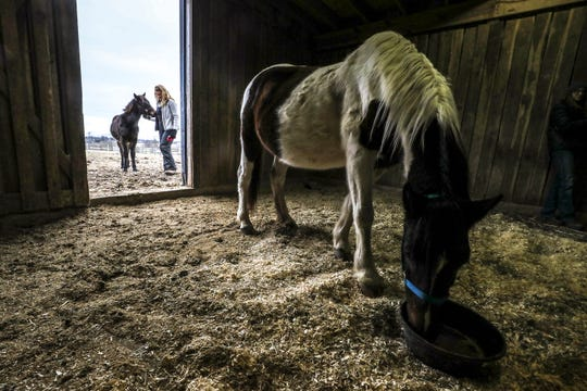 Jessica Glaab visits with Knox, background, a feral horse rescued from Eastern Kentucky. Hope, a free-roaming horse, was also rescued and is one of three horses rescued after the massacre of 20 horses and now lives at the Kentucky Humane Society Farm in Simpsonville. Jan. 21, 2020