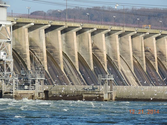 A flock of seagulls at the Conowingo dam in Maryland.