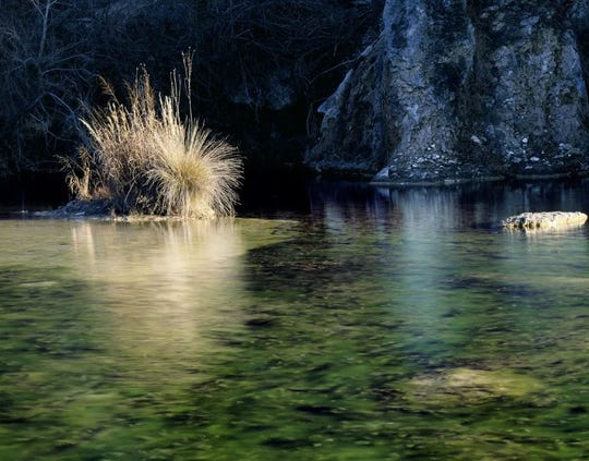 Winter grasses thrive on a tuft of earth in the West Frio River in Real County, Texas. The Nature Conservancy (TNC) has acquired a conservation easement on 1,640 acres owned by landowner Gary Krause, preserving its unique natural features for future generations.