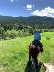 Spruce Ranching Co-op manager, Joe Englehart, heads out to check on cattle herds on Co-op lands.