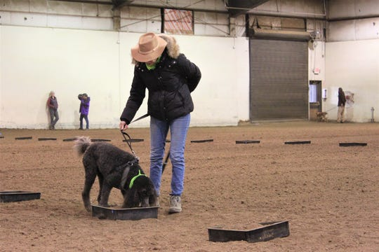 A contestant participates in the first round of the Joriad on January 23, 2020. Called the TORT, the truffle odor recognition trial, handlers walk their dogs down a row of 17 black bins filled with soil on thefloor of the livestock arena at the Lane county fairgrounds.Dogs that identify enough truffle-scented targets move on to the next round.