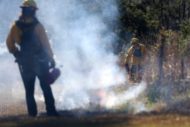 A prescribed burns manager uses a drip torch to ignite brush during a burn demonstration during the Red Hills Fire Festival at Tall Timbers on Saturday, Jan. 25, 2020.