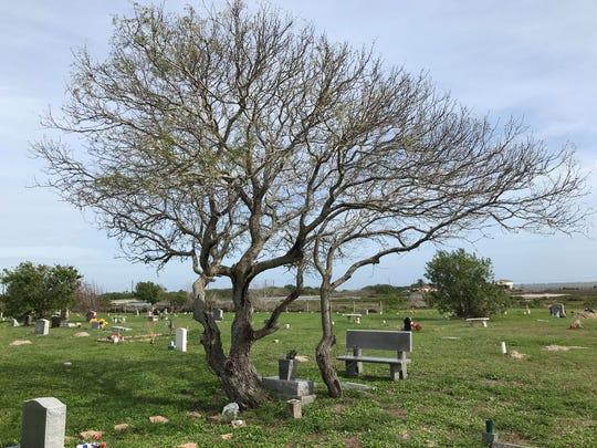 Duncan Cemetery in Corpus Christi where Jessie David Barnes of Wichita Falls is buried.