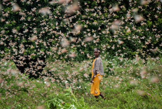 Millions of locusts are swarming in Kenya. These striking photos show just how bad the outbreak is