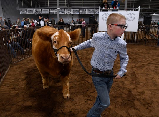 Cash Goretska of Wylie FFA was first to enter the ring with his Overall Grand Champion exotic steer during Saturday's sale at the Taylor County Livestock Show.