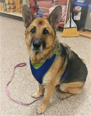 Zoey is waiting for a new owner at the Humane Society of Sandusky County.
