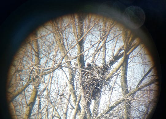Citizen scientists and landowners can help Wisconsin DNR track bald eagle nesting trends by reporting nest sites.