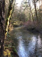 South Fork Alsea River along the Alsea Falls Trail.
