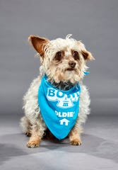 Dayo, from Ninna's Road to Rescue, will play in The Dog Bowl III on Saturday, Feb. 1 on Animal Planet.