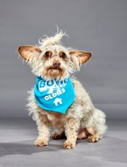 Deka, from Ninna's Road to Rescue, will play in Animal Planet's Dog Bowl III on Saturday, Feb. 1.