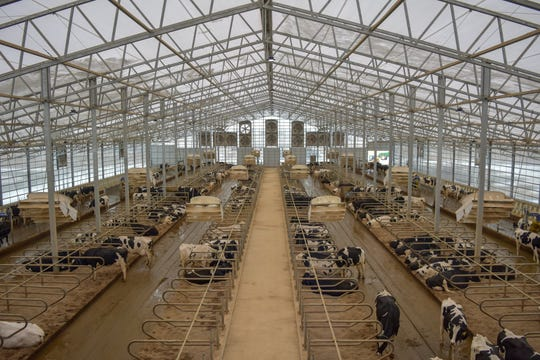 From the observation deck, visitors can watch the normal traffic and activities of the milking herd below, including how they enter and exit the robotic milkers.
