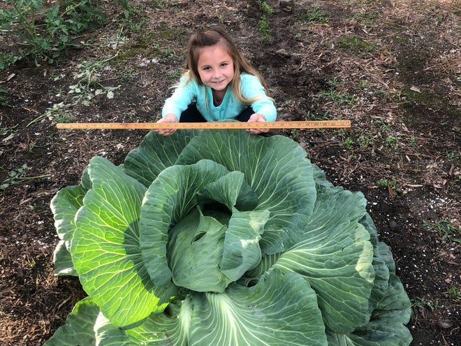 Mia Taylor was named the 2019 South Carolina State Winner for her cabbage that was more than 5 feet wide. The head of Mia's cabbage was 16 inches wide.