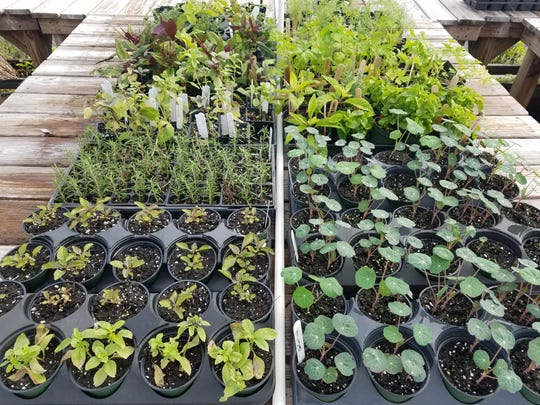 The next Brevard Discovery Garden monthly plant sale is 10 a.m.-noon Feb. 7 at the BDG nursery and greenhouse in Cocoa.