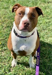 While the Somerset Regional Animal Shelter (SRAS) had a record adoption year in 2019, there are more animals, like Storm, waiting for their forever homes. Contact SRAS at 908-725-0308 for more information.