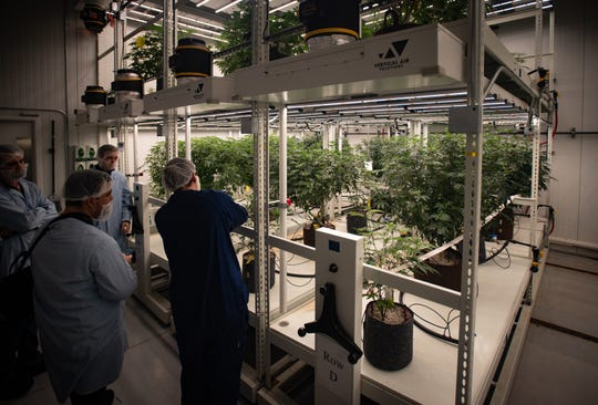 A room of mother plants from which clones are made, pictured Monday, Jan. 27, 2020, at Green Peak Innovations in Dimondale, Michigan.