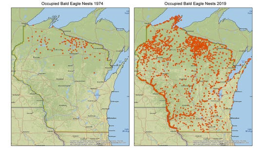 Maps illustrate the dramatic increase in occupied bald eagle nests in Wisconsin from 1974 to 2019.
