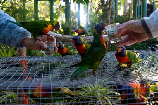 Guest feed lorikeets during the opening of the Terry and Arlene Riegel Lorikeet Pavilion at the Everglades Wonder Gardens in Bonita Springs on Tuesday, Jan. 28, 2020,